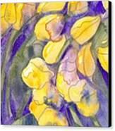 Yellow Tulips 3 Canvas Print