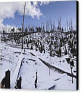 Yellowstone Winter Canvas Print by David Yack