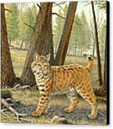 Young Bobcat    Canvas Print by Paul Krapf