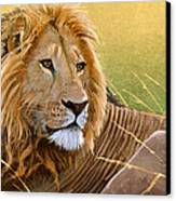 Young Lion Canvas Print by Aaron Blaise