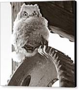 Young Owl On Wheel Canvas Print by Roger Snyder