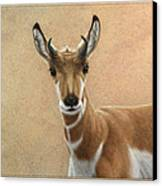 Young Pronghorn Canvas Print by James W Johnson