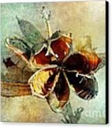 Yucca Pod - Barbara Chichester Canvas Print