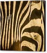 Zebra Eye Canvas Print by Jennifer Burley