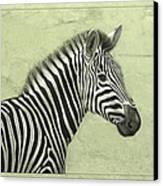 Zebra Canvas Print by James W Johnson