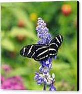 Zebra Longwing Canvas Print by Laurie Perry