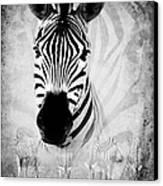 Zebra Profile In Bw Canvas Print