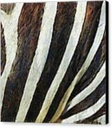 Zebra Texture Canvas Print by Ayse Deniz