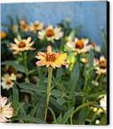 Zinnia Canvas Print by Denice Breaux