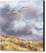 Seagull Flying Over Dunes Canvas Print