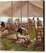 The Sheep Shearing Match Canvas Print