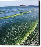 Algal Bloom Canvas Print