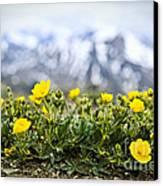 Alpine Meadow In Jasper National Park Canvas Print by Elena Elisseeva