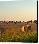 Bales In Peanut Field 2 Canvas Print by Douglas Barnett