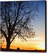 Bare Tree At Sunset Canvas Print