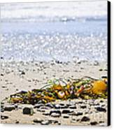 Beach Detail On Pacific Ocean Coast Canvas Print by Elena Elisseeva