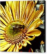 Bee Canvas Print by Kelly Rader