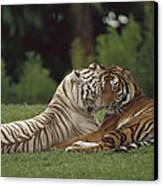 Bengal Tiger Panthera Tigris Tigris Canvas Print by Konrad Wothe