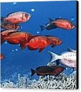 Bigeye Fish Canvas Print