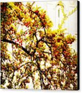 Branch Of Heaven Canvas Print