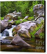 Creek Canvas Print by Carlos Caetano