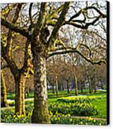 Daffodils In St. James's Park Canvas Print by Elena Elisseeva