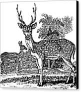 Deer Canvas Print by Granger
