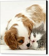 Dog And Cat Canvas Print by Jane Burton
