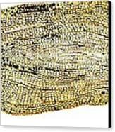 Eel Scale, Light Micrograph Canvas Print