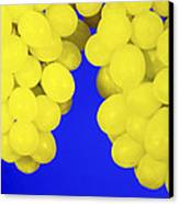 Grapes Canvas Print by Johnny Greig