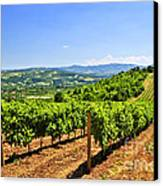 Landscape With Vineyard Canvas Print