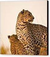 Leopard Panthera Pardus, Arathusa Canvas Print by Stuart Westmorland