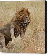 Lion Canvas Print by Alan Clifford