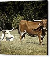 Longhorn Cows Ressting Canvas Print by M K  Miller