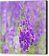 Meadow Of Violets  Canvas Print by Kantilal Patel
