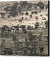 Ngorongoro Crater, Tanzania, Africa Canvas Print by Carson Ganci
