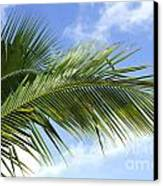 Palm  Canvas Print by Blink Images