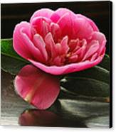 Pink Camellia Canvas Print by Terence Davis