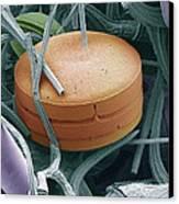 Planktonic Diatom Alga, Sem Canvas Print by Steve Gschmeissner