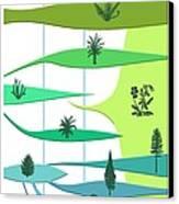 Plant Evolution, Diagram Canvas Print by Gary Hincks
