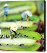 Planting Rice On Kiwifruit Canvas Print by Paul Ge