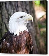 Proud Eagle Canvas Print by Tammy Smith