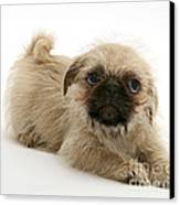 Pugzu And Pug Puppies Canvas Print