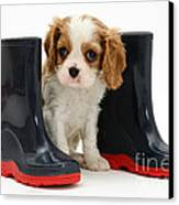 Puppy With Rain Boots Canvas Print by Jane Burton