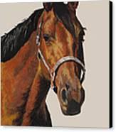 Quarter Horse Canvas Print by Ann Marie Chaffin