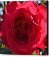 Red Rose Canvas Print by Saifon Anaya