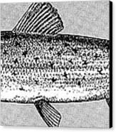 Salmon Canvas Print by Granger