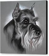 Schnauzer Canvas Print by Patricia Ivy