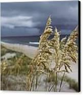 Sea Oats Uniola Panicolata Help Anchor Canvas Print by David Alan Harvey