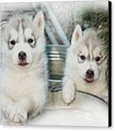 Siberian Husky Puppies Canvas Print